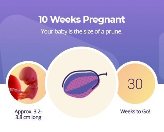 10 week pregnancy