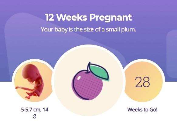 12 week pregnancy