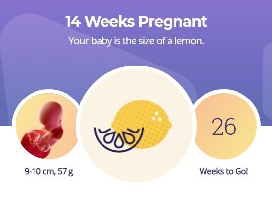 14 week pregnancy