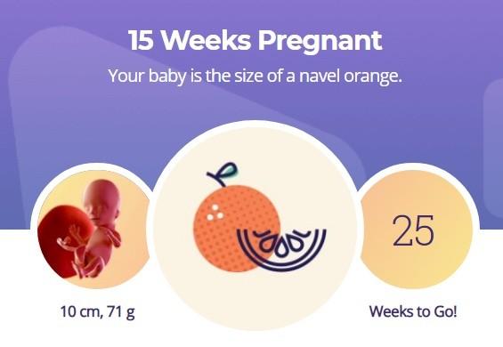 15 week pregnancy
