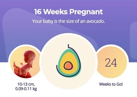 16 week pregnancy