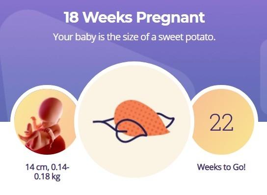 18 week pregnancy