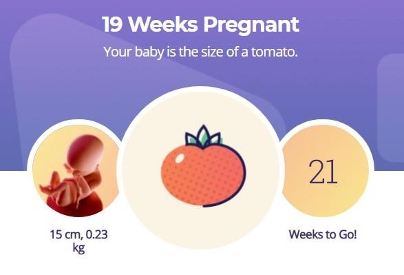19 week pregnancy