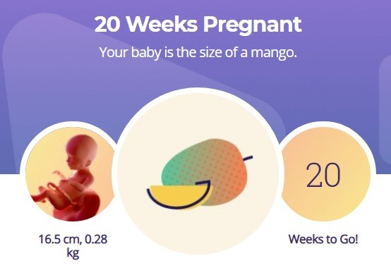 20 week pregnancy