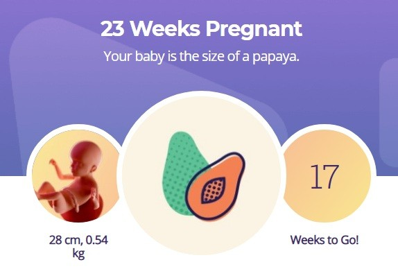23 week pregnancy