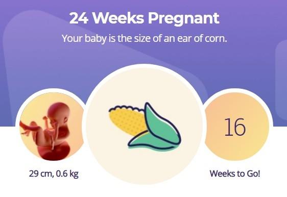 24 week pregnancy