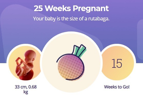 25 week pregnancy