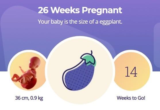 26 week pregnancy