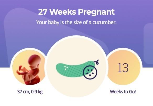 27 week pregnancy
