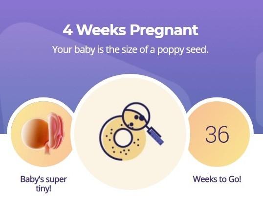 4 week pregnancy