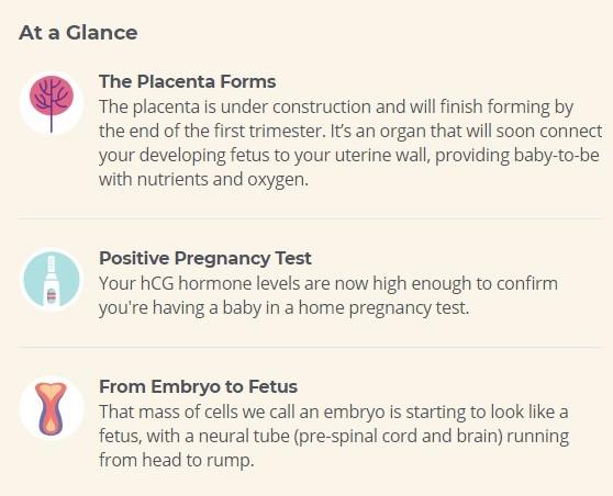 5 week pregnancy