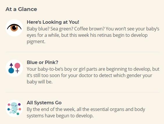 8 week of pregnancy