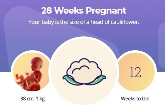 28 week pregnancy