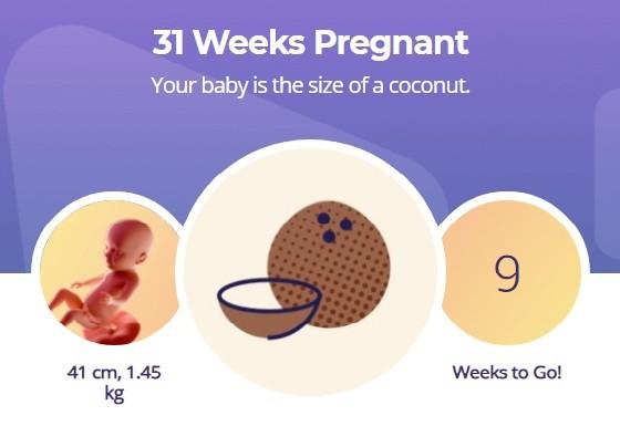 31 week pregnancy