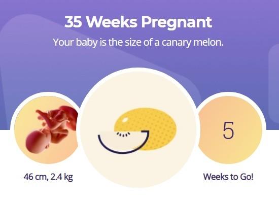 35 week pregnancy