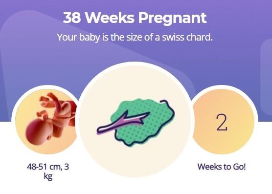 38 week pregnancy
