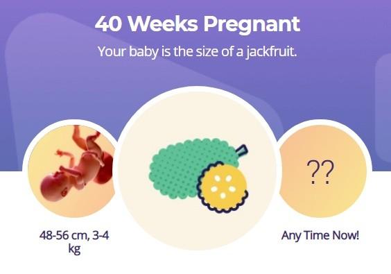 40 week pregnancy
