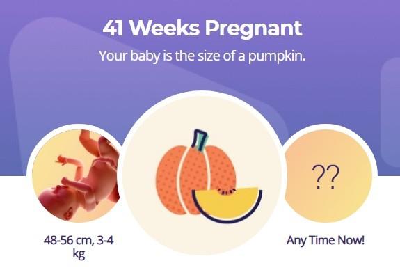 41 week pregnancy