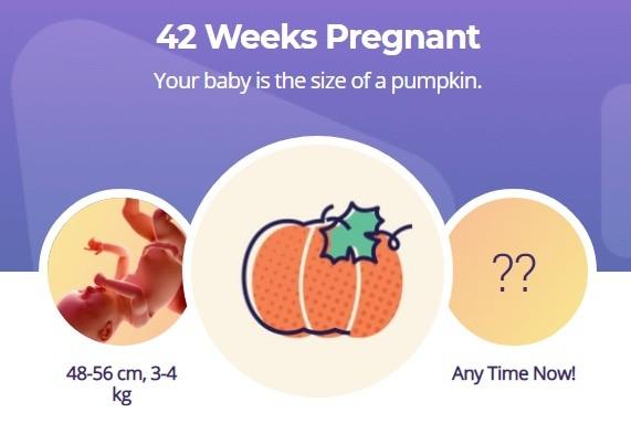 42 week pregnancy